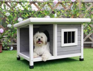 outside dog house for a little dog